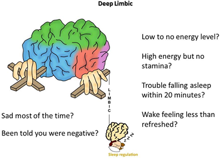 limbic-system-concerns